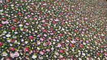 Pamutvászon fekete virágos 183